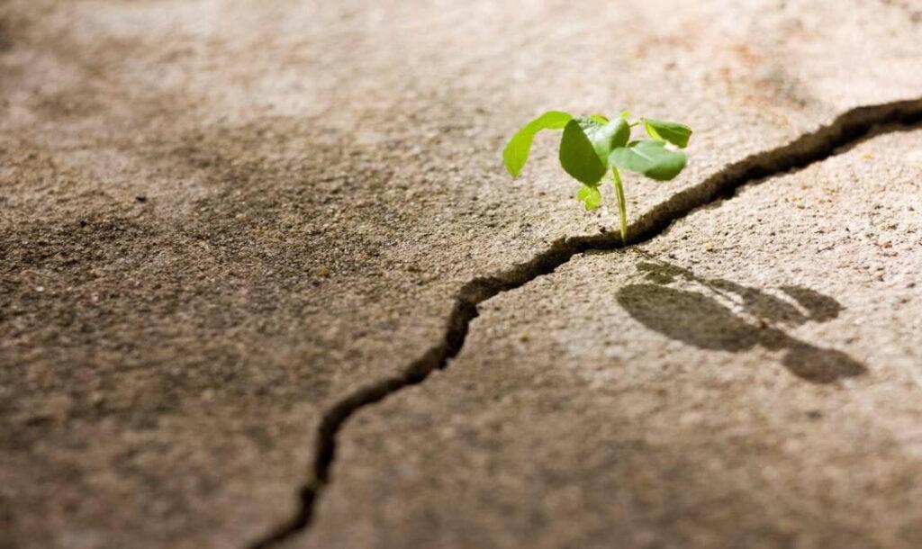 Let us find positives in pandemic - Your Spiritual Revolution Blog